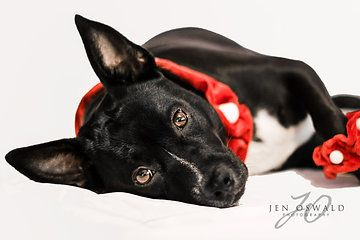 Photo from Pet Photography collection by Jen Oswald Photography