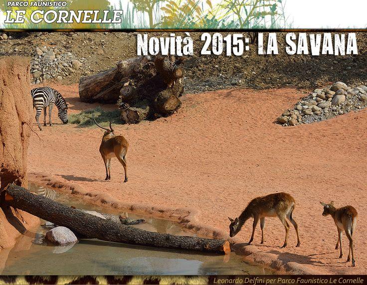 Parco Faunistico Le Cornelle Novità 2015 LA SAVANA - Antilopi   Foto by Leonardo Delfini