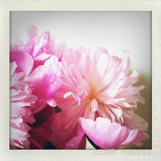 My second favorite.. pianese flower