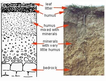 9 best images about soil profile on pinterest the bin for Soil profile video