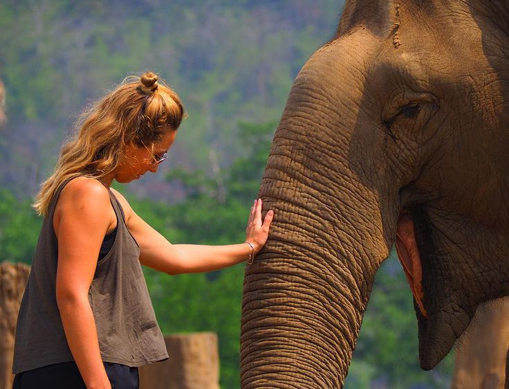 Meeting with an elephant is exceptional