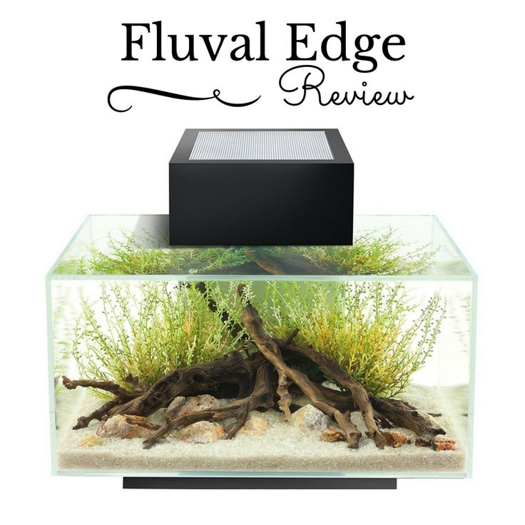 Check out our review on the Fluval Edge 6 Gallon Fish Tank! https://aboutbettafishtanks.com/fluval-edge-6-gallon-fish-tank-review/?utm_content=buffer991ab&utm_medium=social&utm_source=pinterest.com&utm_campaign=buffer - #betta #bettas #bettatank #bettasplendens #bettafish #fish #aquarium #fishtank #instafish #tropicalfish #aquaria #freshwater