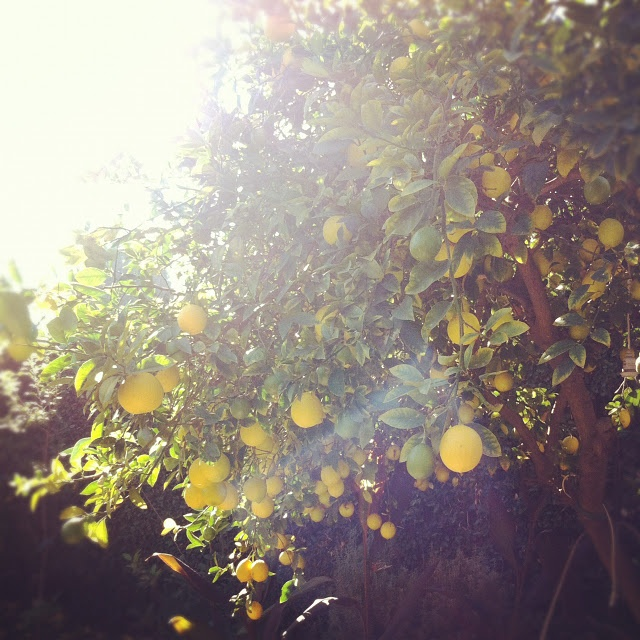 lemon tree very pretty random inspirations. Black Bedroom Furniture Sets. Home Design Ideas