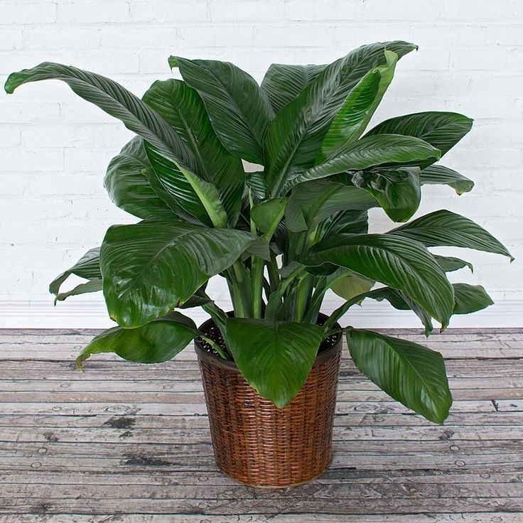 10 Best House Plants for Health Indoor Plants Improve Air