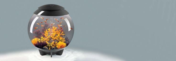 Bildergebnis für biorb aquarium 60l