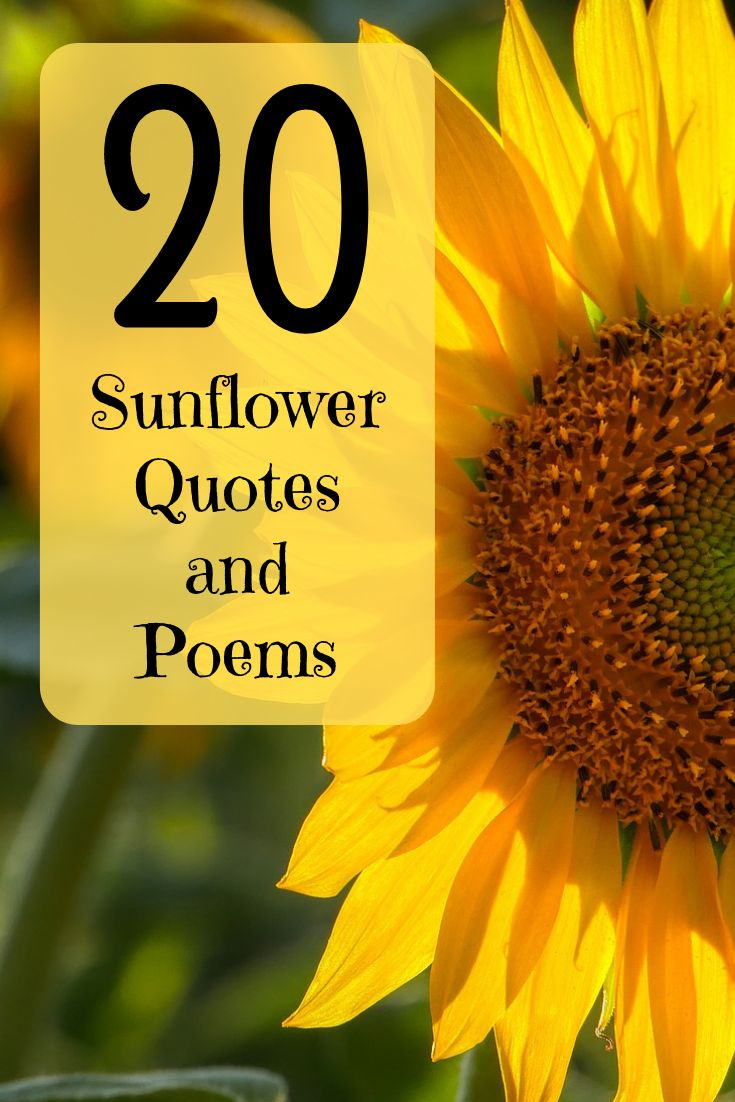 20 Best and Happiest Sunflower Quotes Poems and Sayings
