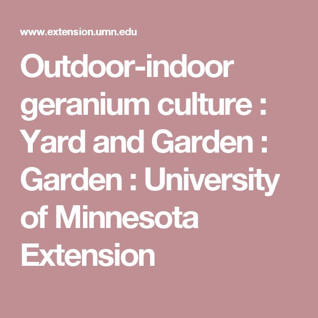 Outdoor-indoor geranium culture : Yard and Garden : Garden : University of Minnesota Extension