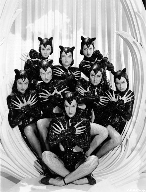 zigfield follies girls as cats