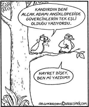 - Kandırdın beni alçak adam. Ansiklopedi de güvercinlerin tek eşli olduğu yazıyordu. + Hayret bir şey ben mi yazdım?  #karikatür #mizah