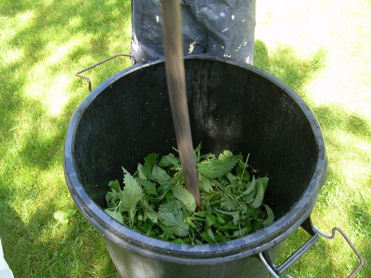 Cómo hacer extracto de ortigas para repeler plagas - La Huerta de Antonia