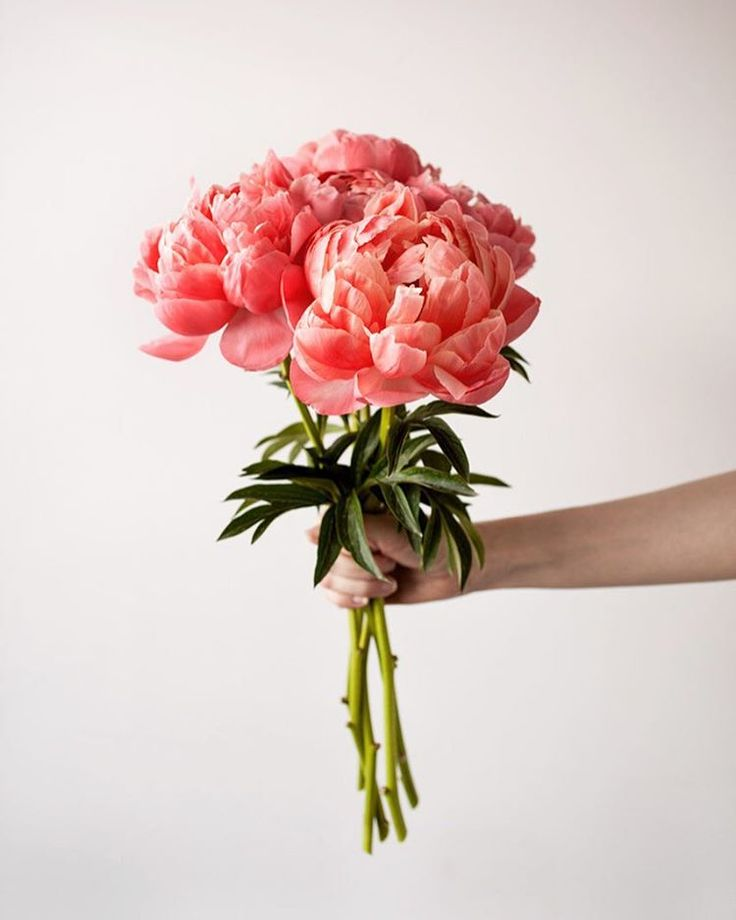 Gorgeous coral peony flower bouquet                                                                                                                                                                                 More