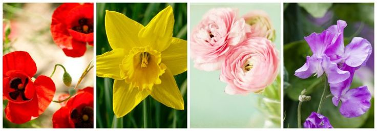March: Poppies, Daffodils, Ranunculus, Sweet Peas