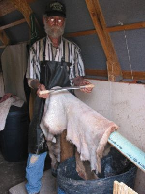 Fleshing a deer hide with a barrel to catch the trimmings.