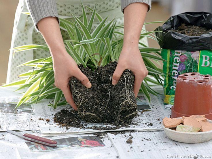 Comment s'occuper de ses plantes d'intérieur au quotidien pour les garder belles longtemps.