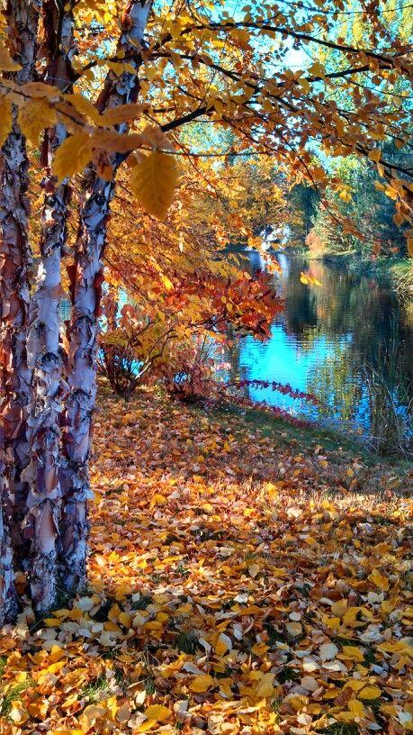 Beautiful fall in Eagle Idaho