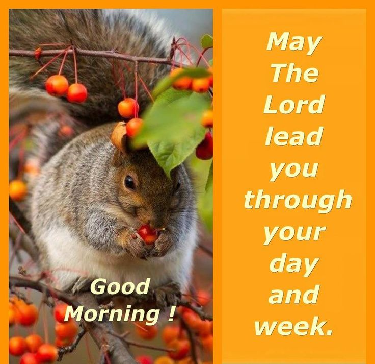A Beautiful Good Morning to all my Lovely Sister's.   Have a Blessed day In Our Lord Ladies!  Love you All!