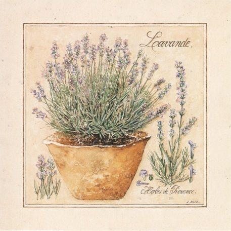 Herbes de Provence II (Laurence David)