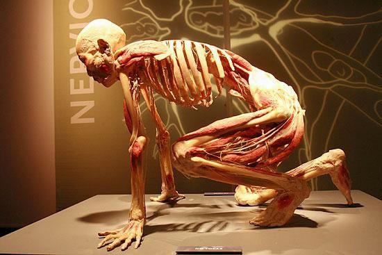 Bodies; The Exhibition.