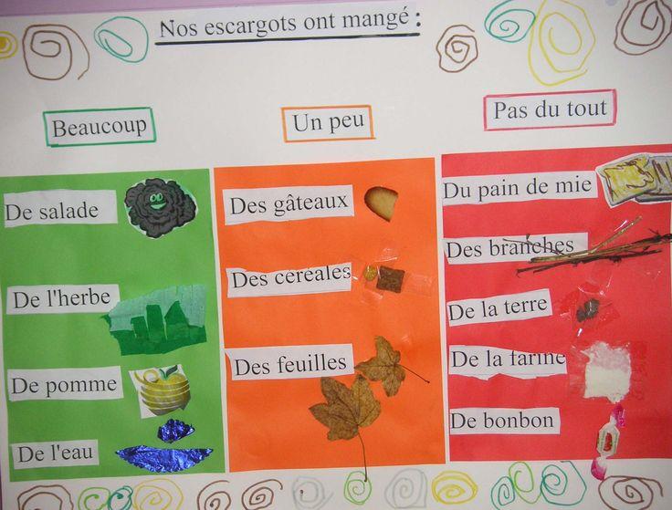 Résultats Google Recherche d'images correspondant à http://www.gommeetgribouillages.fr/Escargotprojet/alimentationescargo.jpg