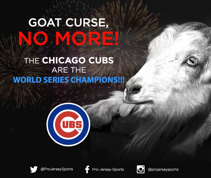 Goat Curse NO MORE!! The Chicago Cubs are the World Series CHAMPIONS!!