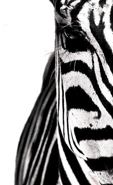 zwart - wit. Helft van een hoofd -- inspirerend