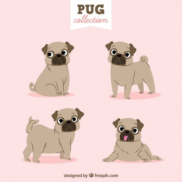Download Lovely Pug Collection For Free Pugs Happy Pug Cute Pugs