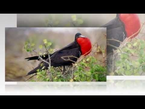 Another slideshow demonstrating the beauty of birds. Created by Peter S. Sakas DVM