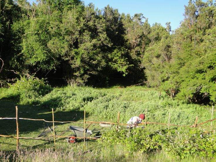 Los comienzos del huerto forestal, con cerco de arrayán y cerco vivo de moras.