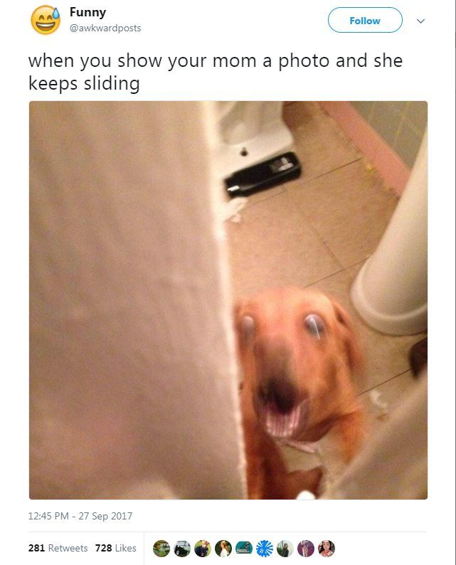 Funny Animal Tweets – 17 Pics