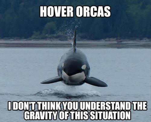 Hover Orcas - http://jokideo.com/hover-orcas/