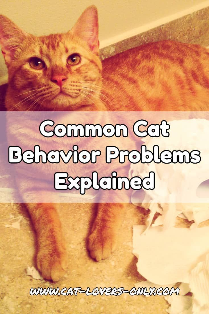 564 best cat behavior images on pinterest