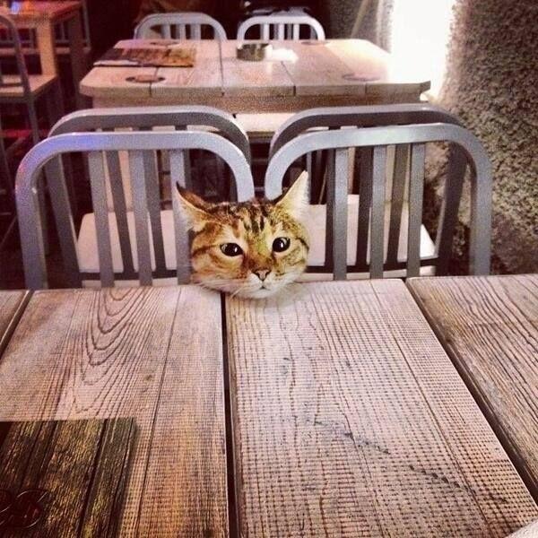 I'll have the tuna salad...