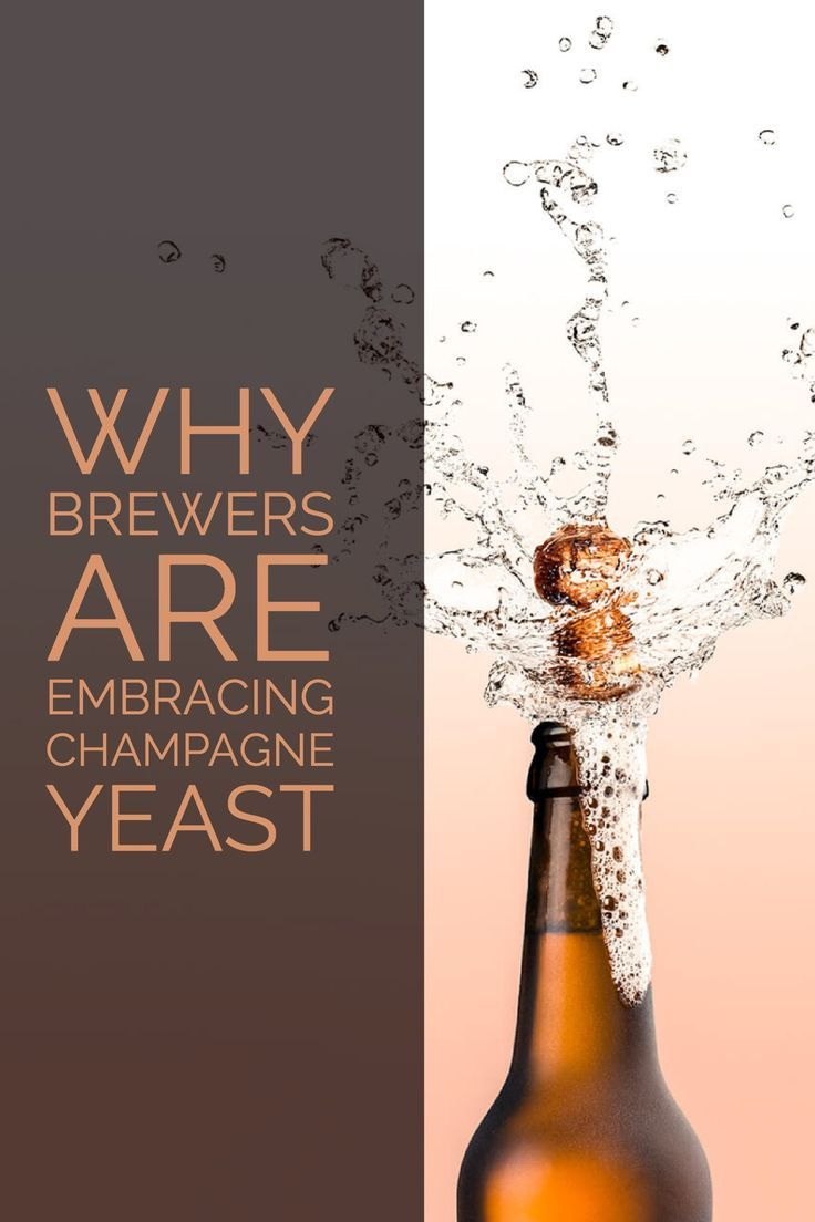 A sparkling alternative for the holidays, discover how Champagne yeast transforms beer into an exciting crossover-style beverage for wine lovers to explore. #wineglasswriter