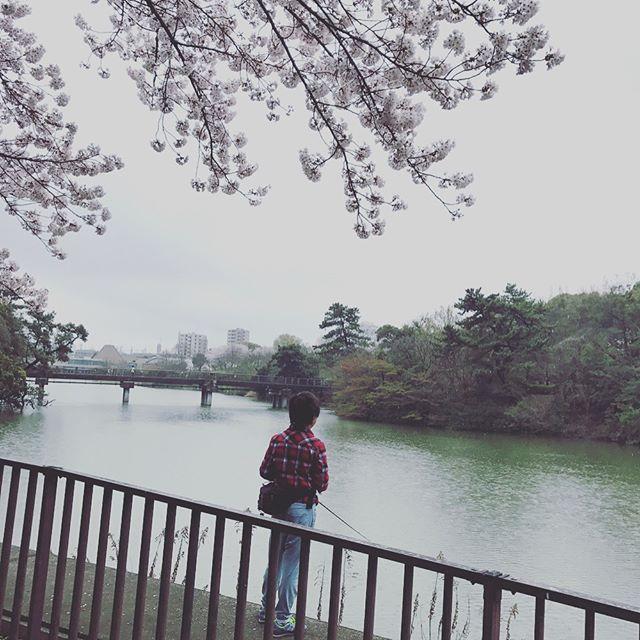 息子の釣りしたい症候群がでてしまったのでさくらを見つつ 散歩しつつ 小雨の中しあわせ村へ  なんか釣れそうな雰囲気してるけどなかなか釣れないね  #ブラックバス#釣り#fishing#息子#桜#聚楽園の大仏  にビビるぷりん  #散歩#チワワ#愛犬#🐾