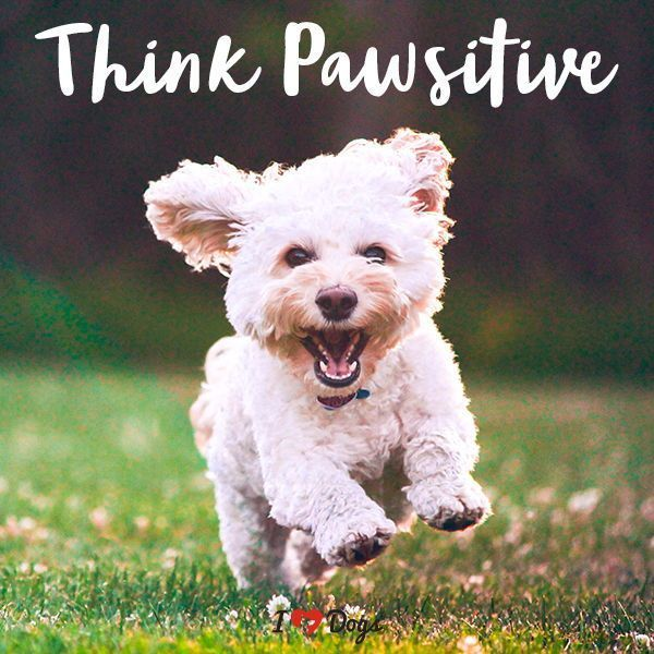 Think Pawsitive Dog Meme Dog Inspirational Dog Quotes Quotes