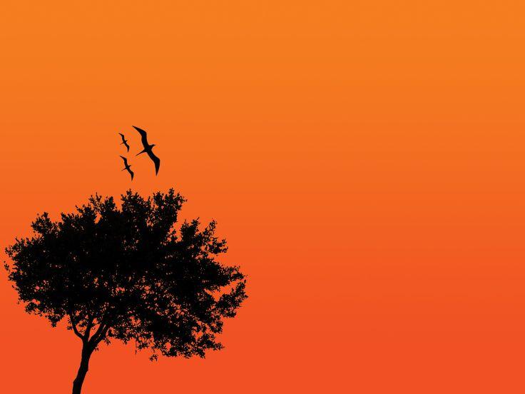 10 best orange black images on pinterest appliances art orange black tree wallpaper voltagebd Image collections