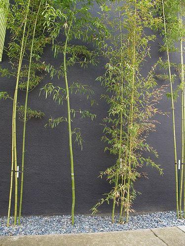 mur peint et bambous