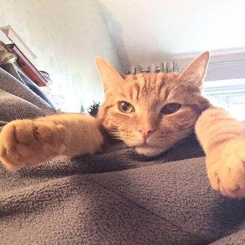 Chilled out. #chill  #gingerkitty #milo #gingercat #gingerkittens  #gingerkitten  #kittensofinstagram #kitten #kittens #kitty #lovekittens #thedailykitten #cats_of_instagram #catsofinstagram  #cute #cutepets #cutepetsclub #instagramcats #instagramkittens #orangecat #orangekitten #furfriends #furbaby #furfriends #furbabies #topcatphoto #cat #cutepetclub #bestcats_oftheworld #beautiful #catportrait