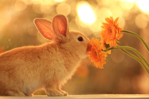 : Rabbit, Photos, Glow Flowers, Gerber Daisies, Animal Pictures, Growing Flowers, Beautiful, Cottages, Bunnies