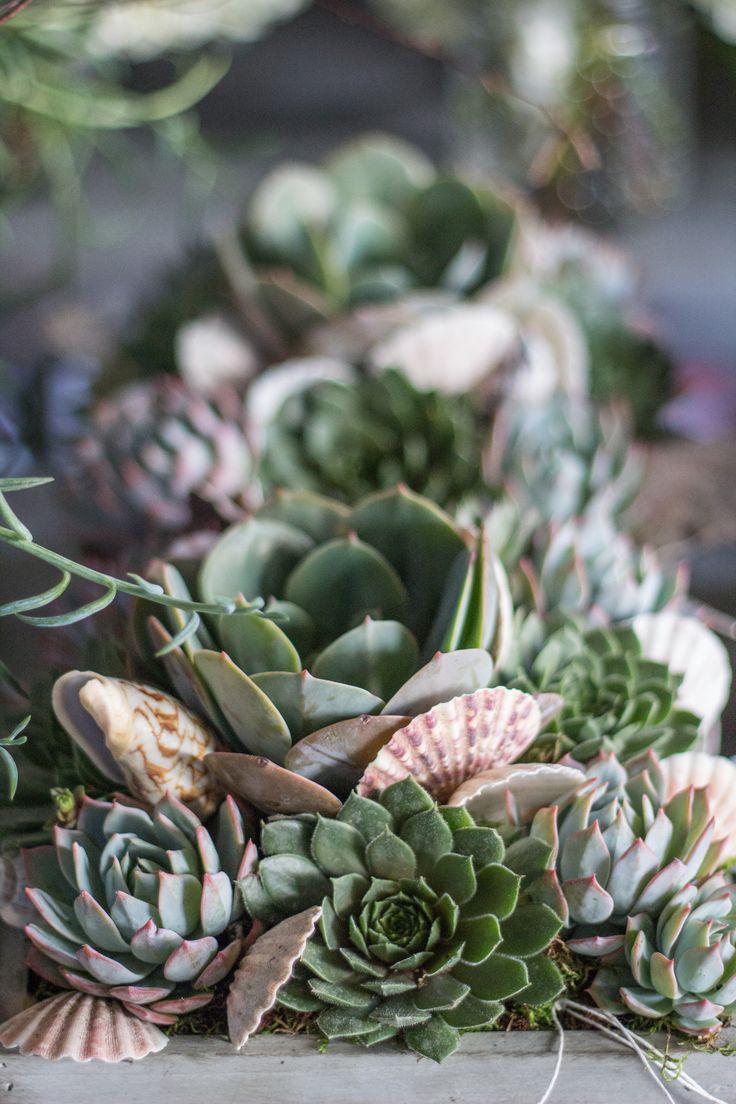 Floral Studio. Succulent ContainersSucculent ...