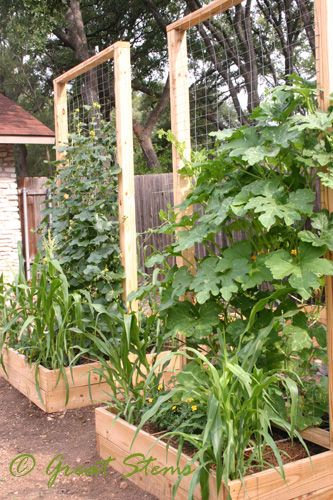 square-foot-garden ~ Maximize Vertical Potential with Trellises