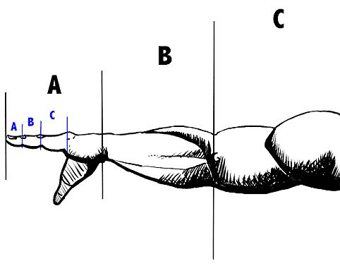 Learn To Draw The Right Proportions With The Rule of The Golden Ratio