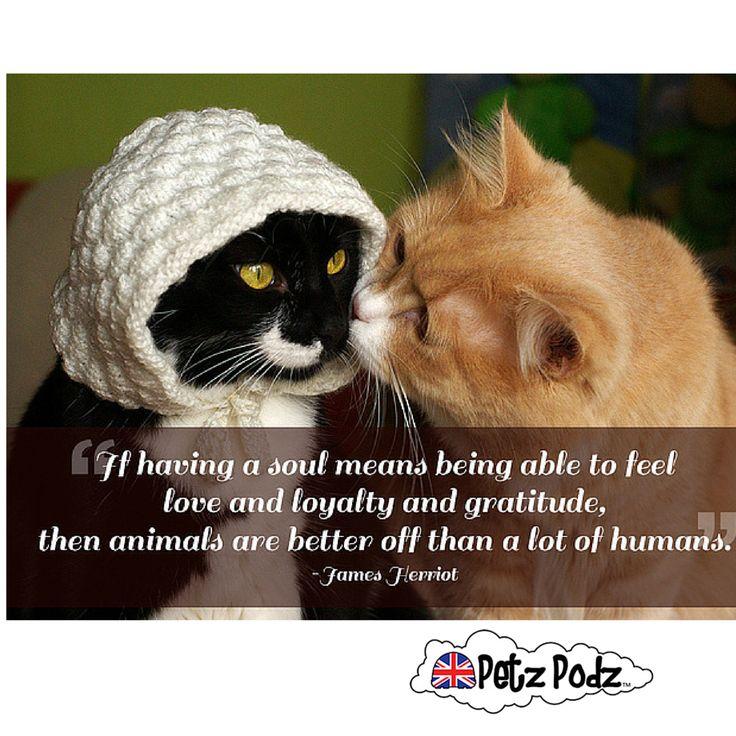Love Animals Quotes Interesting 15 Best Animal Quotes Images On Pinterest  Animal Quotes Animal