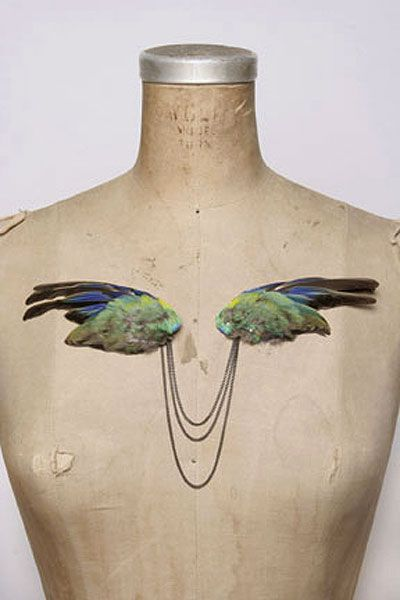 i love this taxidermied parrot wing brooch, but i don't know where i'd wear it...