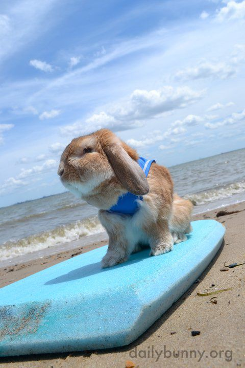 Everybunny's gone surfin'... surfin' USA - July 29, 2014