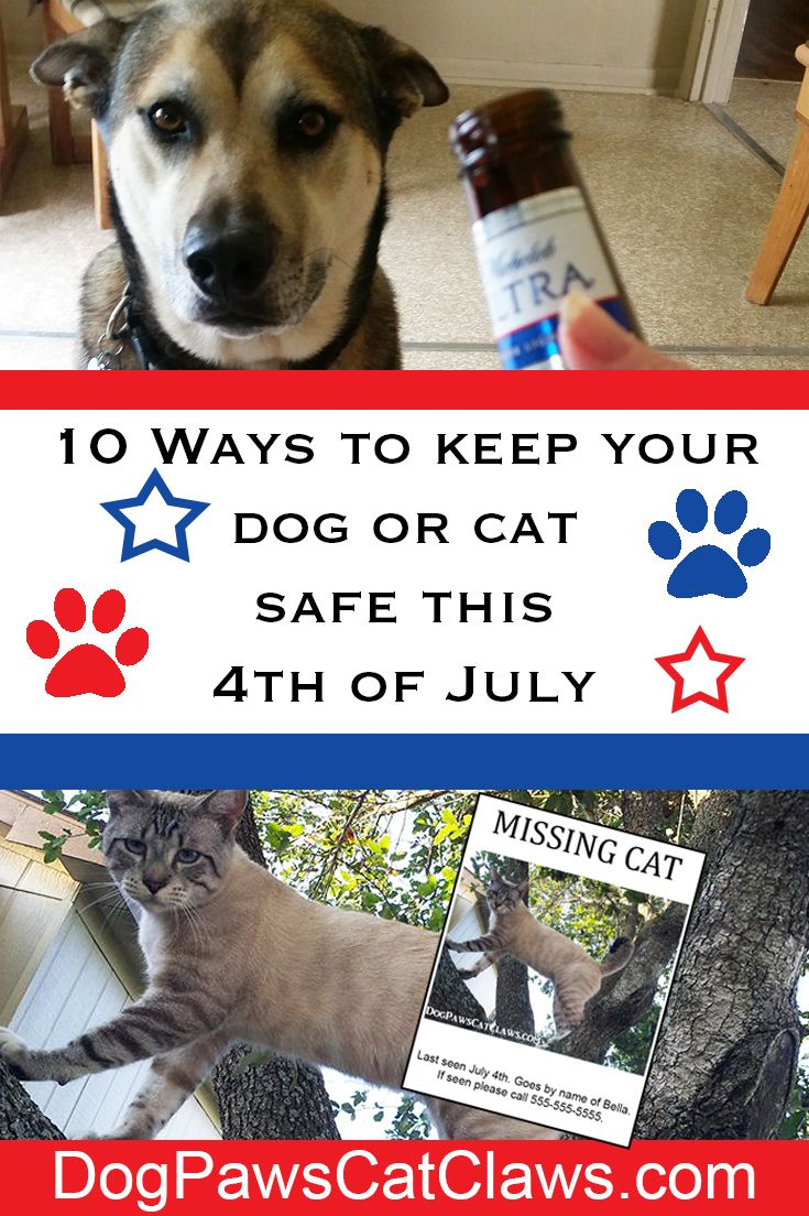 "Learn the Top 10 Safety Rules to Keep your Cat and/or  Dog Safe this July 4th and have a great Independence Day. Read full article by clicking the picture, or ""visit""."