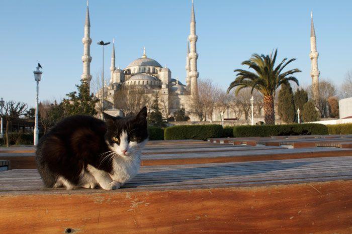 Una veduta della moschea Aziz Mahmud Hüdayi dove vengono accolti i gatti randagi. Fotografia di Brian Gratwicke.