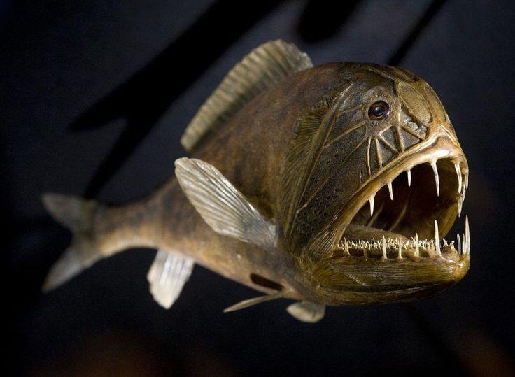 De zee herbergt de meest gruwelijke monsters...