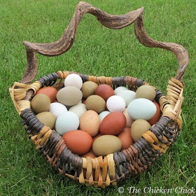 The Chicken Chick: How a Hen Makes an Egg & Egg Oddities. Fascinating stuff! The best compilation I've seen.