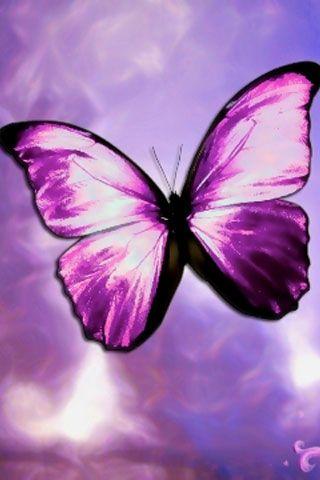 3d digital art butterflies & dragonflies   green butterfly wallpaper black butterfly wallpaper free butterfly ...